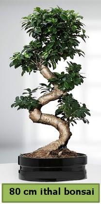 80 cm özel saksıda bonsai bitkisi  Iğdır Karaağaç internetten çiçek satışı