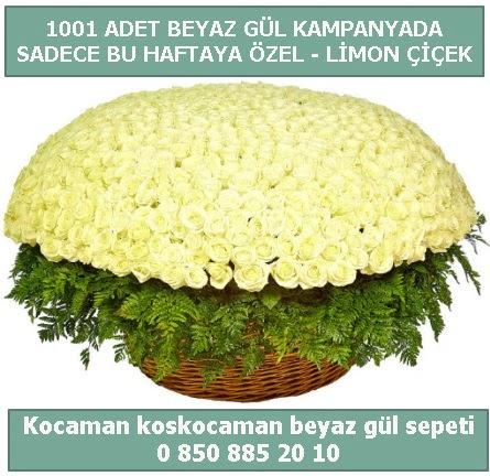 1001 adet beyaz gül sepeti özel kampanyada  Iğdır 14 kasım hediye çiçek yolla