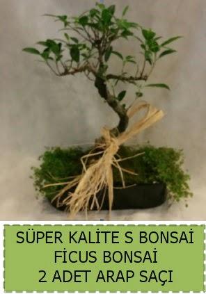 Ficus S Bonsai ve arap saçı  Iğdır Karaağaç internetten çiçek satışı