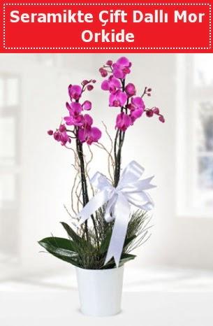 Seramikte Çift Dallı Mor Orkide  Iğdır çiçek yolla yurtiçi ve yurtdışı çiçek siparişi