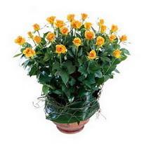 Iğdır Yaycı çiçek mağazası , çiçekçi adresleri  10 adet sari gül tanzim cam yada mika vazoda çiçek
