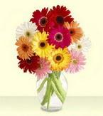 Iğdır topçular çiçek , çiçekçi , çiçekçilik  cam yada mika vazoda 15 özel gerbera