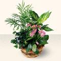 Iğdır 7 kasım çiçekçiler  5 adet canli çiçek sepette