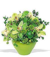 cam yada mika vazoda 5 adet orkide   Iğdır Alikamerli çiçek satışı
