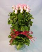 13 adet pembe gül silindirde   Iğdır 12 eylül çiçekçi mağazası