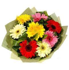 9 adet karisik gerbera demeti  Iğdır karakoyunlu çiçek gönderme sitemiz güvenlidir