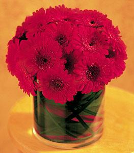 Iğdır Cumhuriyet çiçek siparişi vermek  23 adet gerbera çiçegi sade ve sik cam içerisinde