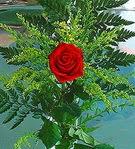1 adet kirmizi gül buketi   Iğdır Özdemir hediye sevgilime hediye çiçek