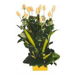 12 adet beyaz gül aranjmani  Iğdır Tuzluca çiçek yolla