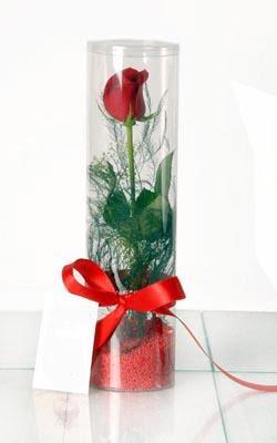 Iğdır 12 eylül çiçekçi mağazası  Silindir vazoda tek kirmizi gül