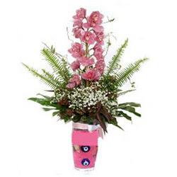 Iğdır Aşağı erhacı online çiçek gönderme sipariş  cam yada mika vazo içerisinde tek dal orkide çiçegi