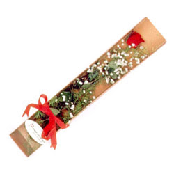 Iğdır Konaklı internetten çiçek siparişi  Kutuda tek 1 adet kirmizi gül çiçegi