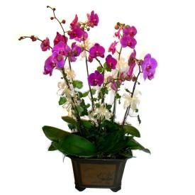 Iğdır Hoşhaber çiçek servisi , çiçekçi adresleri  4 adet orkide çiçegi