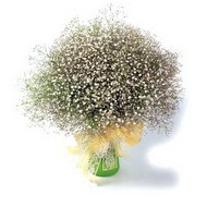 Iğdır karakoyunlu çiçek gönderme sitemiz güvenlidir  cam yada mika vazo içerisinde cipsofilya demeti