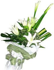 Iğdır Hakveis çiçek gönderme  3 dal kazablanka çiçegi ve yesillikler