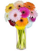 Iğdır Melekli anneler günü çiçek yolla  Farkli renklerde 15 adet gerbera çiçegi