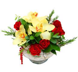 Iğdır Söğütlü çiçek siparişi sitesi  1 kandil kazablanka ve 5 adet kirmizi gül