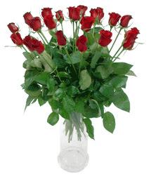 Iğdır Karaağaç internetten çiçek satışı  11 adet kimizi gülün ihtisami cam yada mika vazo modeli
