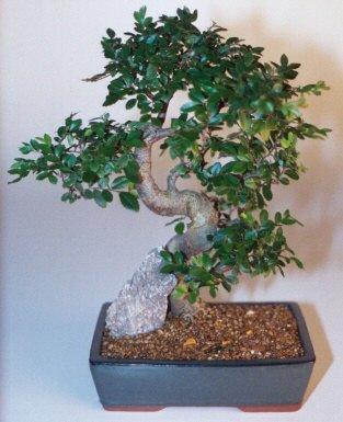 Iğdır 14 kasım hediye çiçek yolla  ithal bonsai saksi çiçegi  Iğdır Obaköy cicekciler , cicek siparisi