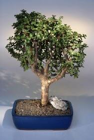 Iğdır Söğütlü çiçek siparişi sitesi  ithal bonsai saksi çiçegi  Iğdır Akyumak 14 şubat sevgililer günü çiçek
