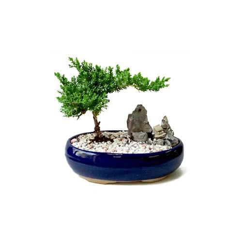 ithal bonsai saksi çiçegi  Iğdır Söğütlü çiçek siparişi sitesi
