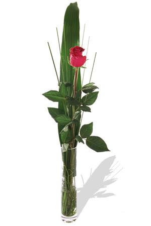 1 adet cam vazo içerisinde kirmizi gül  Iğdır Konaklı internetten çiçek siparişi