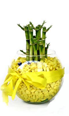 cam fanus içerisinde bambo  Iğdır Enginalan uluslararası çiçek gönderme