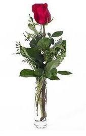 Vazo içerisinde 1 adet kirmizi gül  Iğdır Yaycı çiçek mağazası , çiçekçi adresleri