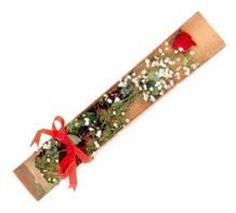 1 adet kirmizi gül  Iğdır Karaağaç internetten çiçek satışı