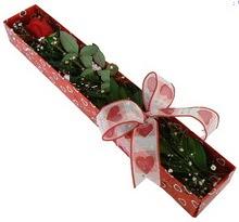 Tek kirmizi gül kutu içerisinde  Iğdır Hakveis çiçek gönderme