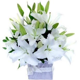 Iğdır 12 eylül çiçekçi mağazası  2 dal cazablanca vazo çiçeği