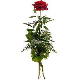 Iğdır Alikamerli çiçek satışı  1 adet kırmızı gülden buket