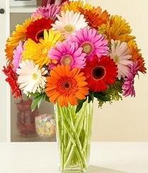 Iğdır Aralık İnternetten çiçek siparişi  15 adet gerbera çiçek vazosu