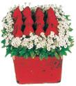 Iğdır Söğütlü çiçek siparişi sitesi  Kare cam yada mika içinde kirmizi güller - anneler günü seçimi özel çiçek