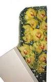 Iğdır Söğütlü çiçek siparişi sitesi  Kutu içerisine dal cymbidium orkide