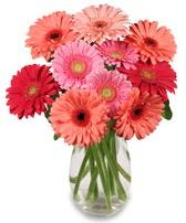 vazo içerisinde 13 adet gerbera çiçeği  Iğdır Obaköy cicekciler , cicek siparisi