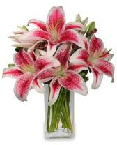 Vazo içerisinde 5 dal kazablanka çiçeği  Iğdır Yaycı çiçek mağazası , çiçekçi adresleri