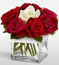 Tek aşkımsın çiçeği 8 kırmızı 1 beyaz gül  Iğdır Kasımcan kaliteli taze ve ucuz çiçekler