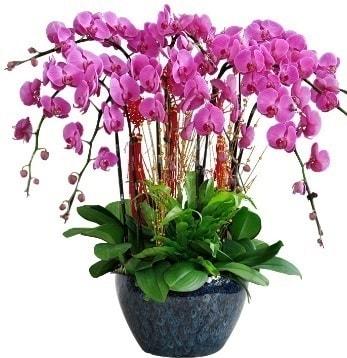 9 dallı mor orkide  Iğdır çiçekçiler güvenli kaliteli hızlı çiçek