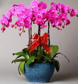 7 dallı mor orkide  Iğdır çiçekçiler , çiçek yolla , çiçek gönder , çiçekçi