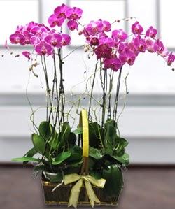 4 dallı mor orkide  Iğdır Hakveis çiçek gönderme