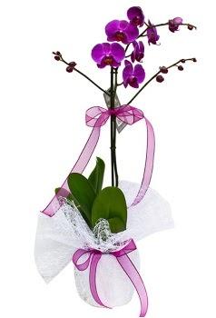 Tek dallı mor orkide  Iğdır Karaağaç internetten çiçek satışı