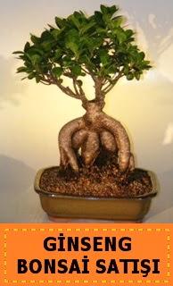 Ginseng bonsai satışı japon ağacı  Iğdır Hoşhaber çiçek servisi , çiçekçi adresleri
