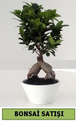 Bonsai japon ağacı satışı  Iğdır Aralık İnternetten çiçek siparişi