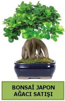 Bonsai japon ağacı satışı  Iğdır 7 kasım çiçekçiler