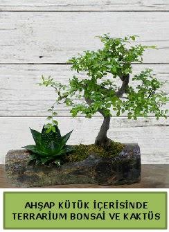 Ahşap kütük bonsai kaktüs teraryum  Iğdır Melekli anneler günü çiçek yolla