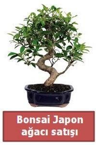 Japon ağacı bonsai satışı  Iğdır Obaköy cicekciler , cicek siparisi