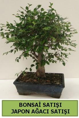 Minyatür bonsai japon ağacı satışı  Iğdır 14 kasım hediye çiçek yolla