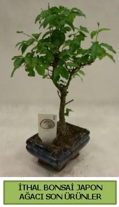 İthal bonsai japon ağacı bitkisi  Iğdır çiçek gönder online çiçekçi , çiçek siparişi