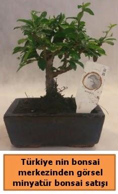 Japon ağacı bonsai satışı ithal görsel  Iğdır 12 eylül çiçekçi mağazası